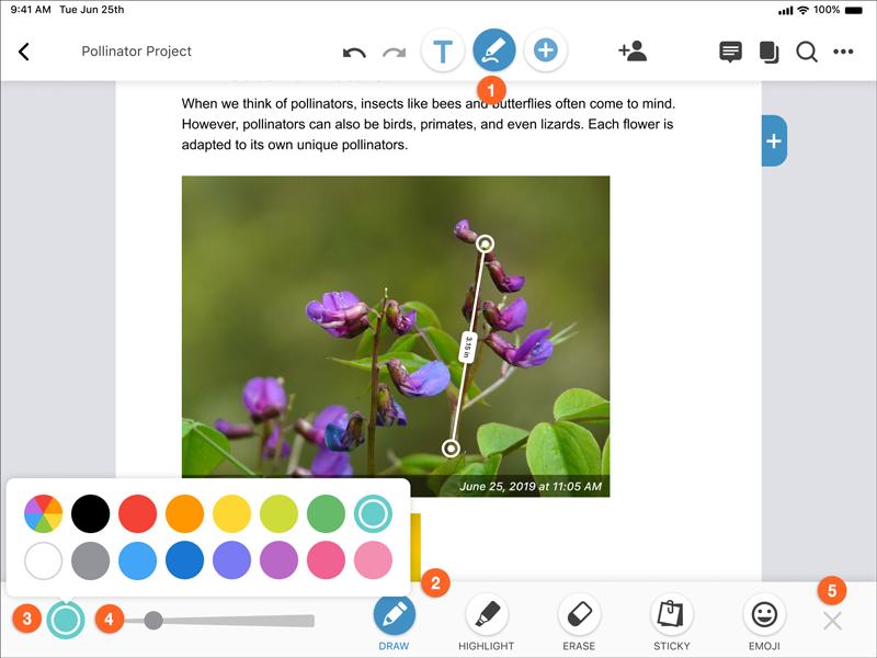 annotation menu (draw color selector)